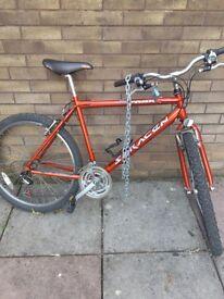 Saracen bicycle adult