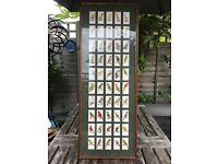 John Players c1933 Cigarette Cards Aviary & Cage Birds 50 cards in frame