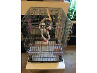 3 x Hand Tame Budgies & Cage