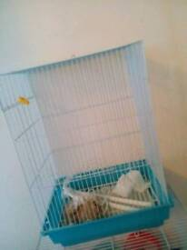 Budgie cage with accessories with food