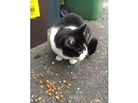Cat found in Penylan area,Cardiff.We think female.Black-white.Very friendly