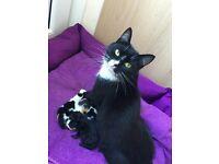 4 Kittens 2x black and white, 1 black tabby, 1 ginger black and white