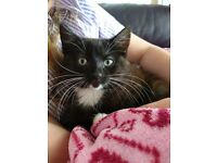 BLACK&WHITE TABBY MARKINGS UNDERCOAT*DOG FRIENDLY GIRL KITTEN*READY TO GO*VERY TAME/TRUSTING*LOVELY*