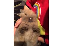 Rabbit baby bunny