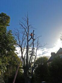 Tree Surgeon Groundsman / Climber Wanted