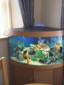 Fluvial trigon 190 corner fish tank