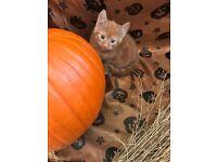 spooktacular kittens