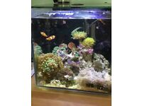 Aquaray Marine fish tank with led lid & everything you need to get started!