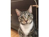 Adorable male cat looking for a new home