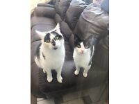 George is 10mths and Oreos is nearly 2yrs old. They love each other and can't be separated.