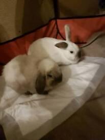 Lovey bunnies