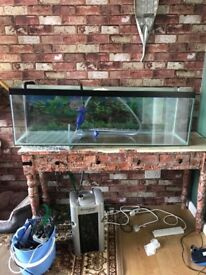 Fish tank and pump