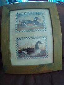 Print Of 2 Ducks in Frame.