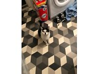Black and white cat been around my area east end past few nights