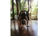 Yoga Workshop - Arm Balancing for beginners