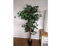 165cm Artificial Tree