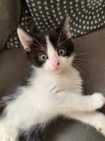 Kitten ready now