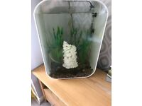 Biorb Life 60l tank, accessories and fish