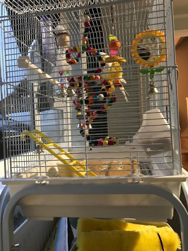 Budgies & cage etc