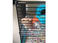 Dwarf Hamster & Cage