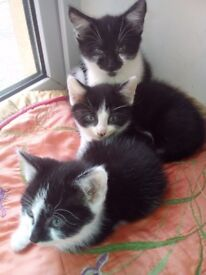 Looking for there forever home cat lovers only