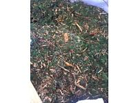 REDUCED: 1 ton bags of loose clippings; Ideal for gardens/ allotments /compost x 12 bags.