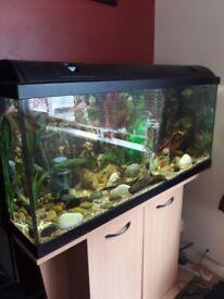 160 liter fish tank on stand