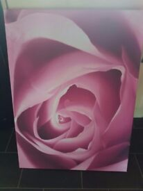 pink rose canvas