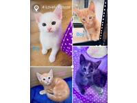 (ALL RESERVED) Finding new homes for 4 lovely kittens