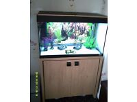 Fluval 125 tank and cabinet