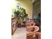 Medical/Beauty/Therapy Room to Rent in Edmonton North London