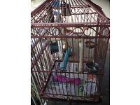 Cockatiel with cage