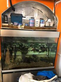 EVERYTHING MUST GO! 240litre aquarium with around 10 fish