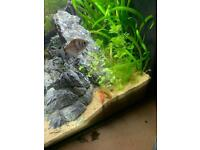 5 tetra for rehoming