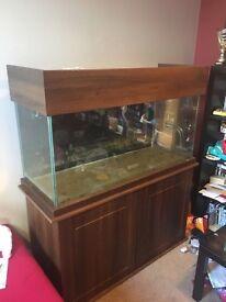 4 foot fish tank whole setup