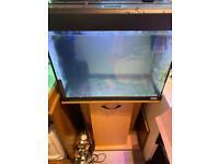 Fluval Roma 90L fish tank aquarium
