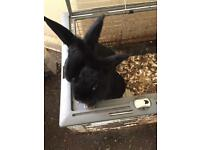 A couple of cute rabbits are looking for new home
