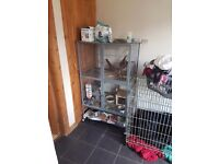 3 female chinchillas with two story large cage