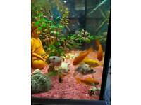 Cold water fish for sale