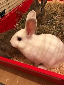 3 x beautiful rabbits for sale ! Must go urgently !! Asap!!