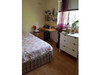 Double spacious room to rent
