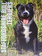 Bull Terrier Book
