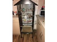 6 Budgies + 5ft Cage STILL FOR SALE AFTER A LOT OF INTEREST