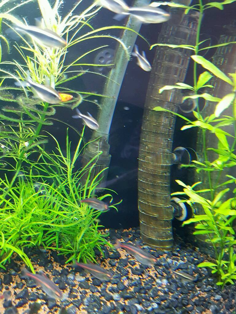 Aquarium fish tank for sale in london - Fish Tank For Sale Co2 System Image 1 Of 6