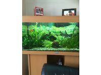 Fish aquarium with stand including all that you see and fish