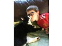 """Missing Family black+white Cat """"Lemon"""" / east Belfast"""