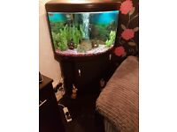 Ufo 550 fishtank and stand