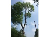 Tree surgeon/ landscaping /chipper hire / stump grinder / grass cutting / fully qualified / insured