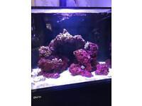 Marine aquarium red Sea reefer 170