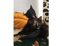 2 adorable and loving kittens for sale